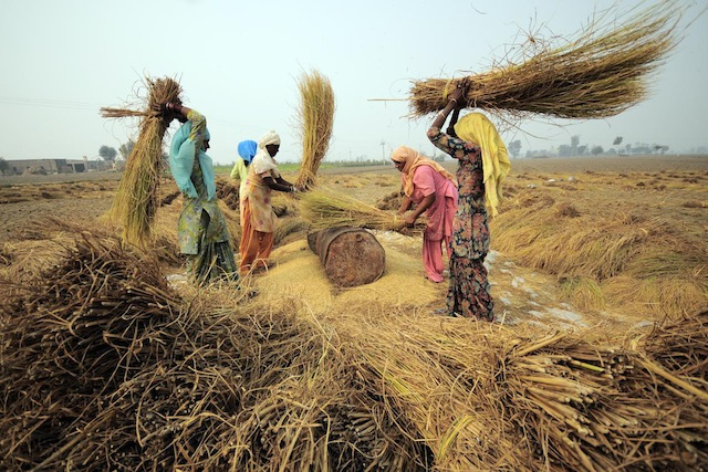 A roadmap to preserve food security from climate change