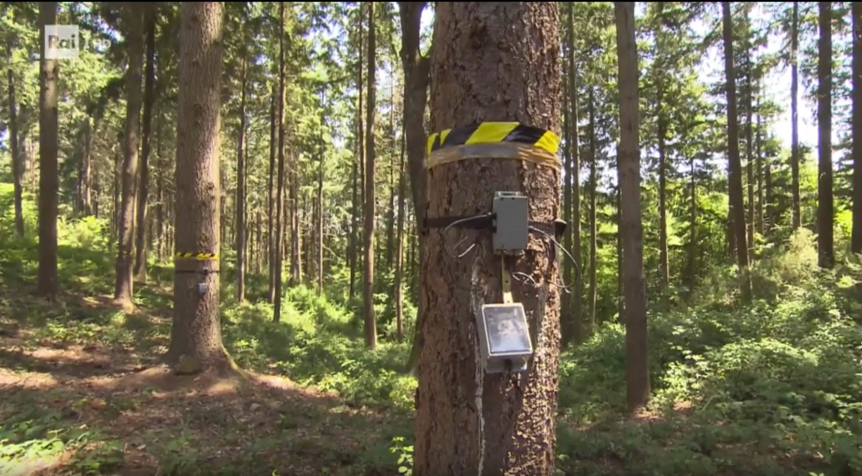 Hi-tech forests: TRACE project in Super Quark programme video