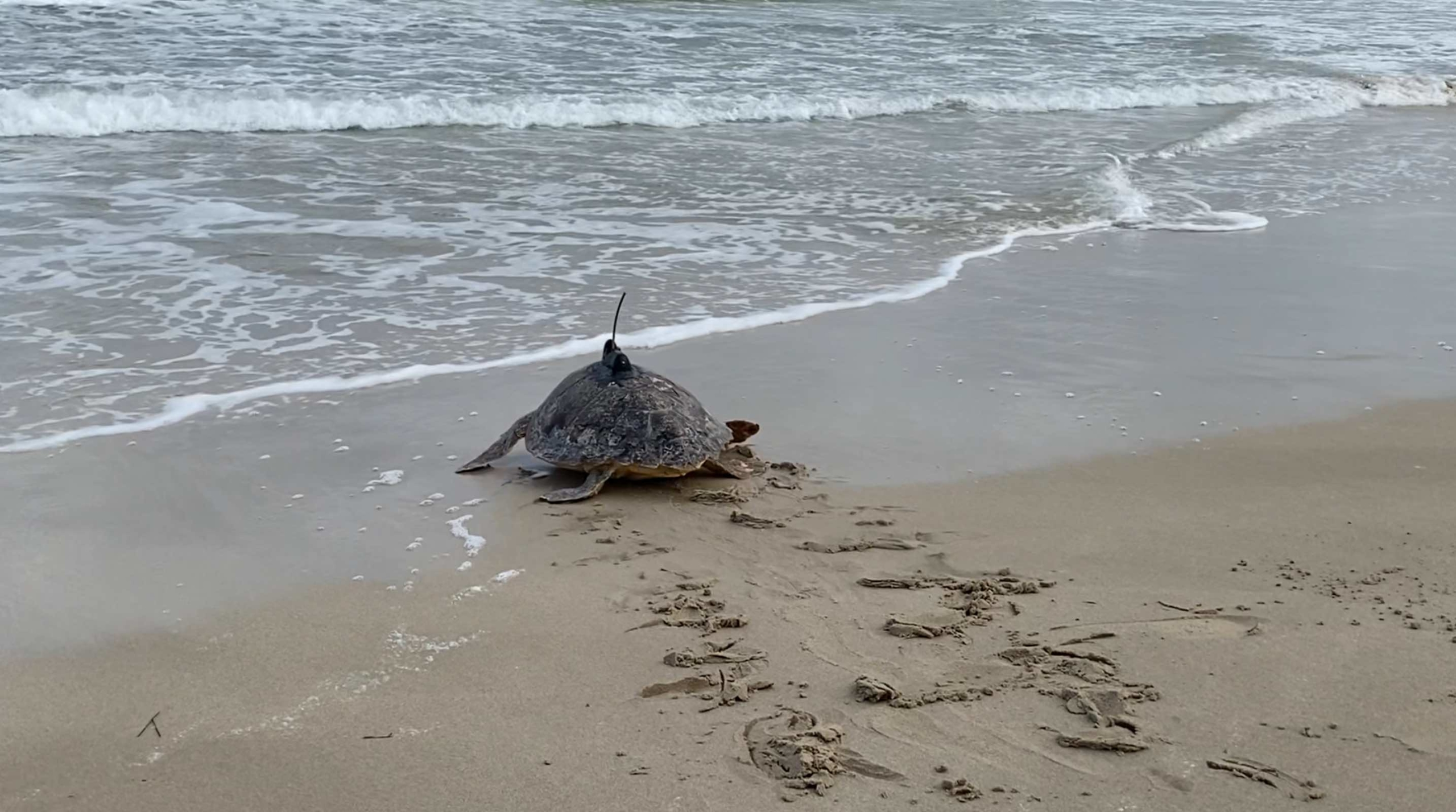 Mysea: CMCC research for marine turtle protection